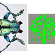 El escarabajo de cuernos largos inspira en la lucha contra la falsificación