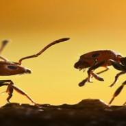 Las hormigas responden a la información social en reposo