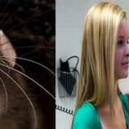 Adolescente infectado con fiebre por mordedura de rata