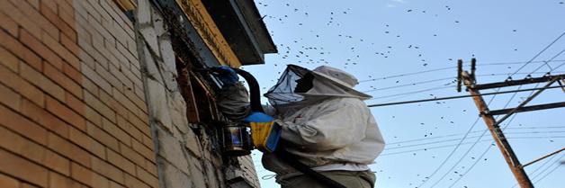 Control de abejas