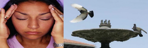 Control de aves. Metodos para control de palomas