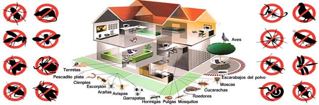 Fumigaciones fumigadora continente - Plaga de hormigas en mi casa ...