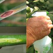 Los fungicidas biológicos, ¿funcionan y son seguros?