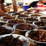 Los grillos comestibles pueden ser criados sobre las malas hierbas