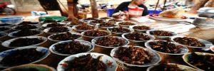Los grillos comestibles pueden ser criados sobre las malas hierbas en Argentina