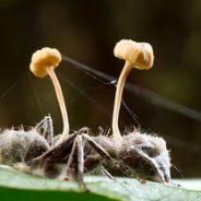 Hormigas mueren como zombis por un hongo