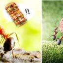 Secretos de las antenas en las hormigas
