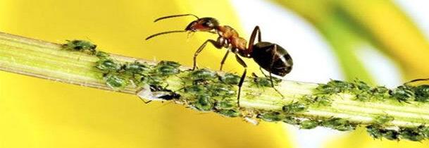 ¿Son las hormigas la respuesta al secuestro de CO2?