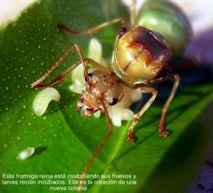 hormigas24