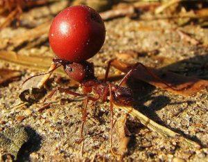 hormigas26
