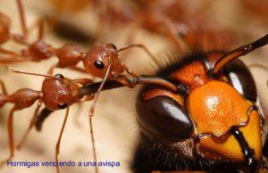 hormigas29