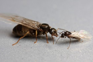 hormigas32