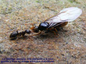 hormigas39