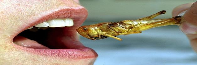Los insectos son la única solución para el hambre mundial