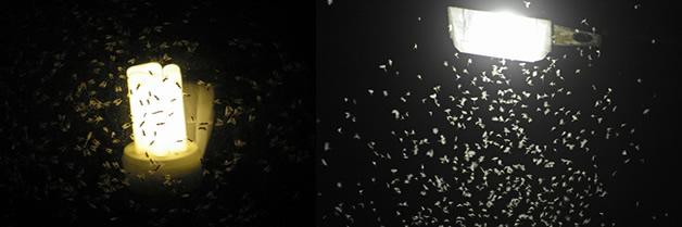 ¿Por qué los insectos son atraídos por las luces?