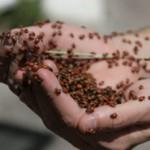 Plagas y enfermedades en el invernadero