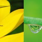 Los 5 mejores Insectos para su césped y jardín