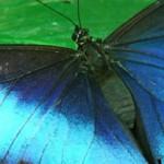 Insectos brillantes pueden alumbrar el camino a una gran industria farmacéutica