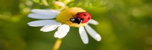 Un nuevo sistema para deshacerse de las plagas. Las plantas silvestres comúnmente emiten olores naturales