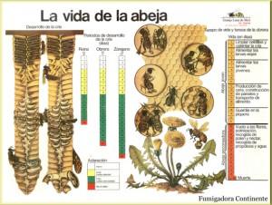 la-abeja-descripcion-fumigacion