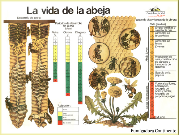 abeja-alfalfa-fumigacion