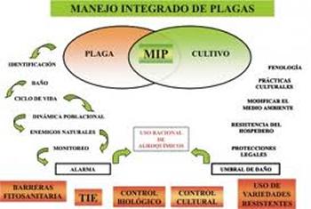 Manejo Integrado de plagas. El MIP es el mejor sistema de control