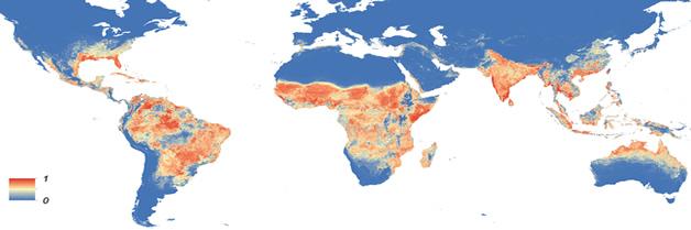 Los mosquitos portadores de virus se han extendido mas que nunca