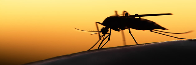 La población de mosquitos crece no solo en EEUU, sino mundialmente