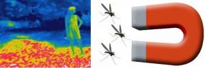 Descubren como los mosquitos buscan la sangre humana. Los mosquitos hembra.