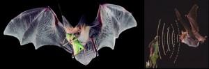 Revelan nuevas señales sobre la caza de murciélagos, la capacidad de algunos murciélagos para detectar presas inmóviles
