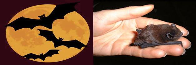 Los murciélagos y la rabia