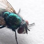Algunas enfermedades transmitidas por insectos