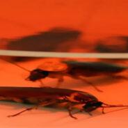Hasta las cucarachas tienen su propia personalidad