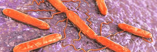 Encuentran nuevo serotipo de salmonela