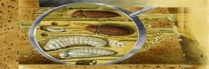 taladro-de-madera-carcoma