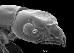 termitas-distinta especie