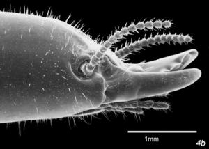 estudio termitas imagenes