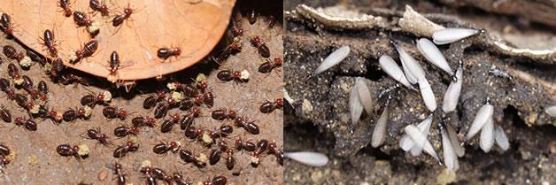 Como saber si tenemos termitas en casa fumigadora continente - Casa de hormigas ...