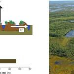 Los científicos advierten que todo el ecosistema está amenazado