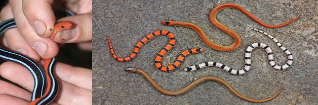 Serpientes en locales y viviendas