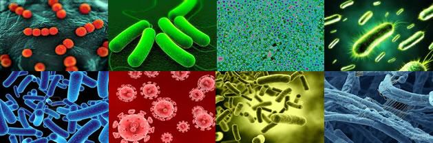 Listado no exhaustivo de virus que pueden afectar al ser humano
