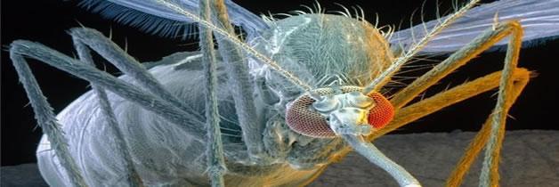 Debemos cuidarnos en Argentina por un nuevo virus el Zika